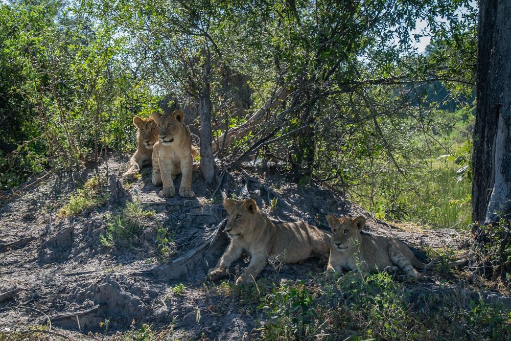 Fotoreis Afrika